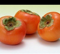 Shop Matsumoto Japanese Persimmon - 5 Gallon