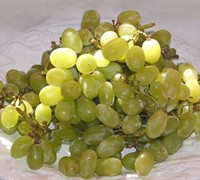 Thompson Seedless Grape - Vitis vinifera 'Thompson Seedless'