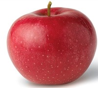 Red Rome Apple - Malus domestica 'Red Rome'