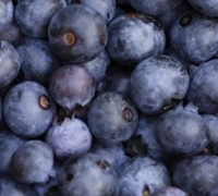 Pearl River Southern Highbush Blueberry