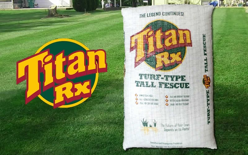 Titan RX Turf Type Tall Fescue - 5 Pound Bag -  Large Area Covering Groundcover Plants | ToGoGarden