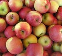 Shop Fuji Apple - 5 Gallon