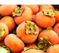 Shop Hana Fuyu Japanese Persimmon - 3 Gallon