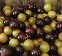 Shop Scuppernong Muscadine - 1 Gallon