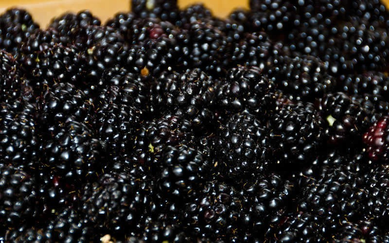 Ouachita Thornless Blackberry - 3 Gallon - Blackberry Bushes | ToGoGarden