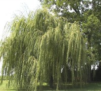 Shop Willow - 3 Gallon